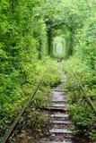 Túnel del amor Imagen de archivo libre de regalías