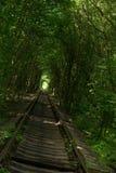 Túnel del amor en Klevan Foto de archivo