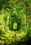 Túnel del ferrocarril del amor Fotos de archivo libres de regalías