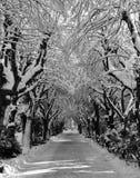 Túnel del invierno Imagenes de archivo