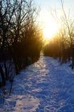 Túnel del invierno Foto de archivo libre de regalías