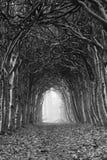 Túnel del otoño Foto de archivo libre de regalías