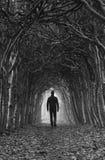 Túnel del otoño Imagenes de archivo