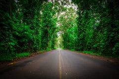 Túnel del verde Fotos de archivo libres de regalías