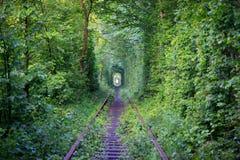 Túnel do amor Imagem de Stock Royalty Free