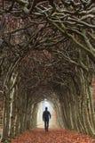 Túnel do outono Imagem de Stock