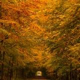 Túnel do outono Imagem de Stock Royalty Free