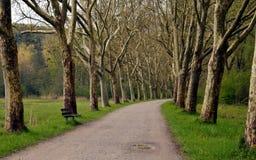 Túnel do verão das árvores Imagem de Stock