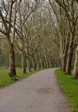 Túnel do verão das árvores Fotos de Stock