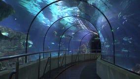 Túnel e vidro no aquário vídeos de arquivo