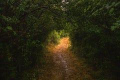 Túnel feito fora das árvores e da vegetação verdes Fotos de Stock Royalty Free