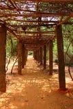 Túnel frondoso Auroville Imagen de archivo