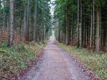 Túnel hecho fuera de árboles en el bosque Imagen de archivo libre de regalías