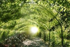 Túnel mágico verde fotos de stock royalty free