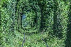 Túnel natural del amor formado por los árboles foto de archivo libre de regalías