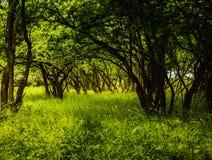 Túnel natural em uma floresta Foto de Stock Royalty Free