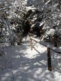 Túnel nevado de branchces da árvore Fotos de Stock Royalty Free