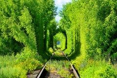 Túnel railway romântico nas árvores fotos de stock royalty free
