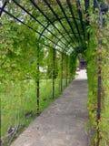 Túnel verde imágenes de archivo libres de regalías