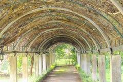 Túnel verde da árvore do ramo no fundo concreta e de aço da construção imagens de stock