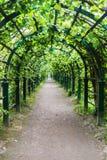 Túnel verde das árvores e dos arbustos no parque Imagem de Stock