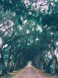 Túnel verde de la naturaleza Fotografía de archivo libre de regalías
