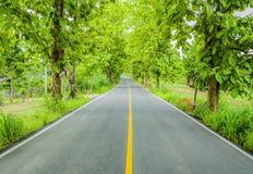 Túnel verde de los árboles Imagenes de archivo