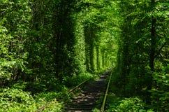 Túnel verde del amor hecho sin ayuda humana Klevan, Ucrania Imágenes de archivo libres de regalías
