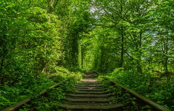 Túnel verde del amor hecho sin ayuda humana Klevan, Ucrania Foto de archivo libre de regalías
