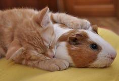 Tümmler und rotes Kätzchen Lizenzfreie Stockfotos