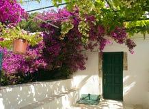 Tür und Bouganvilla. Stockfoto