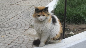Türkische Katze lizenzfreies stockfoto