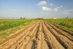 Türkischer Bauernhof Lizenzfreie Stockfotografie