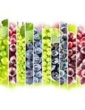 Tęcz kolorowi winogrona paskują kolekcję na białym backgroun obraz royalty free