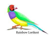 Tęczy lorikeet ptak Egzotyczny zwierzę w naturze ilustracji