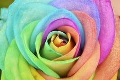 Tęczy Różany tło Zdjęcie Stock
