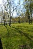 Tęsk cienie od drzew w wczesnym poranku w wiośnie Zdjęcia Stock
