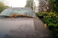 Tęsk parkował na chodniczku samochód, ono spadać liście i gęstego pył Fotografia Royalty Free