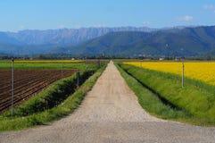 Tęsk prosta kraju żwiru droga w równinie wśród zaoranej ziemi i canola pola w kwiacie, obraz royalty free
