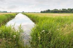 Tęsk przykop w Holenderskim torfowiskowym łąkowym terenie Fotografia Stock