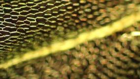 Tętniąca mech mozaika zbiory