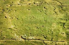 tła ściga jedzący zielony drewno Obrazy Stock