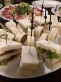 tła śmieszny gwinei lunch nad świniowatym portreta czas biel Fotografia Royalty Free