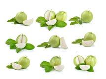 tła świeżego guava odosobniony biel Fotografia Stock