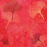 tła abstrakcjonistyczny ginkgo opuszczać czerwień Zdjęcie Royalty Free