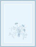 tła błękit pola kwiaty Zdjęcie Stock