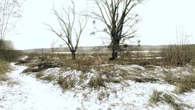 tła błękit sen frostwork łabędź zima zbiory