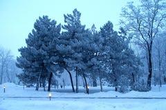 tła błękit sen frostwork łabędź zima Fotografia Royalty Free