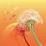 tła błękitny dandelion niebo Fotografia Stock