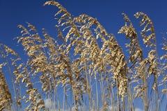 tła błękitny traw niebo dziki Fotografia Royalty Free
